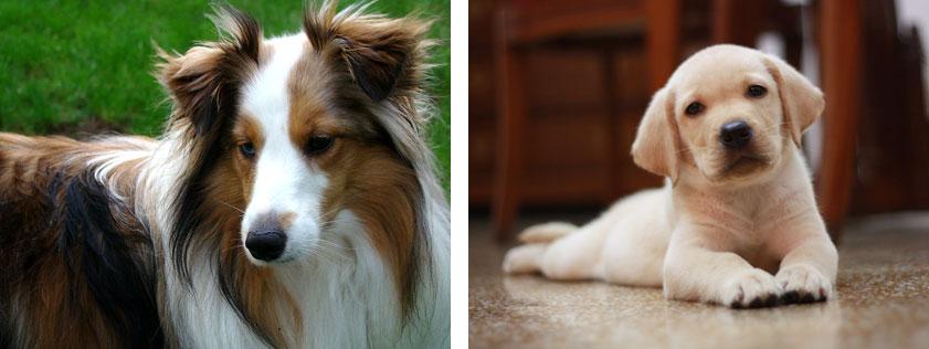 BOTTOM-IMAGE-dogs
